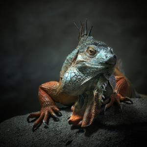I Am the King. Who Else!? by Holger Droste