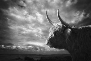 The Highlands by Holger Droste
