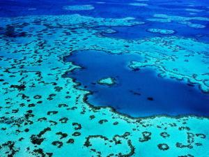Aerial of Heart-Shaped Reef at Hardy Reef, Near Whitsunday Islands by Holger Leue