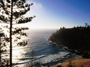 Anson Bay with Norfolk Island Pines, Australia by Holger Leue