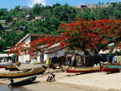 Beach with Flamboyant Tree on Anse la Raye, Anse la Raye by Holger Leue