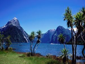 Cabbage Trees at Milford Sound with Mitre Peak in Background at Left by Holger Leue