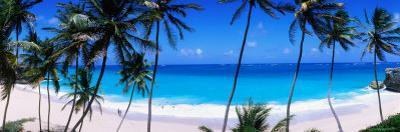 Coconut Trees Along Bottom Bay