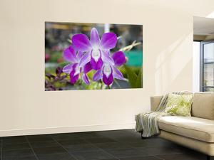 Flowering Orchid by Holger Leue