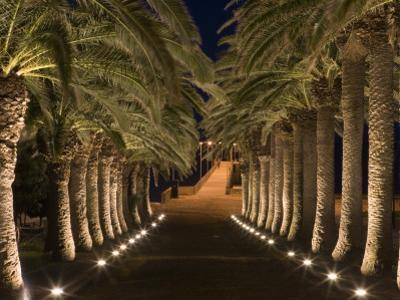 Palm-Lined Path and Pier at Night by Holger Leue
