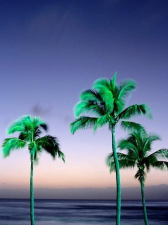 Palms at Dusk, Poipu, USA by Holger Leue