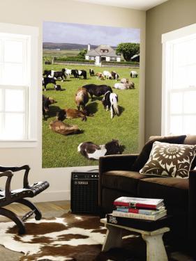 Shetland Ponies at Gott Farm by Holger Leue