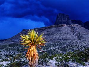 Yucca with Thunderstorm in Background, Guadalupe Mountains National Park, Texas by Holger Leue