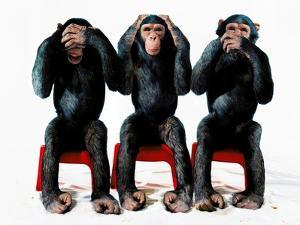 Three chimpanzees by Holger Scheibe
