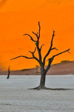 Africa, Namibia, Sossusvlei. Dead Acacia Trees in the White Clay Pan at Deadvlei in the Morning Lig by Hollice Looney