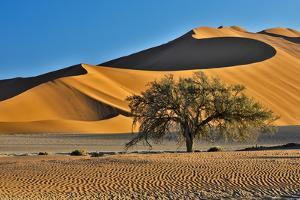 Africa, Namibia, Sossusvlei Dunes in the Morning Light by Hollice Looney