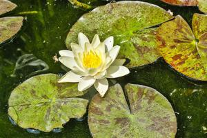 Spain, Barcelona. Parc Guell, lily pad. by Hollice Looney
