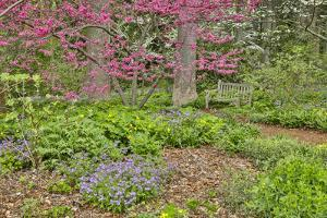 USA, Delaware, Hockessin. Flowering dogwood in the forest by Hollice Looney