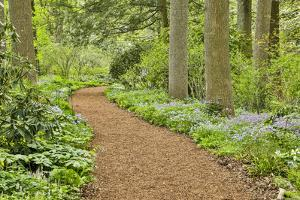 USA, Delaware, Hockessin. Path through the forest by Hollice Looney