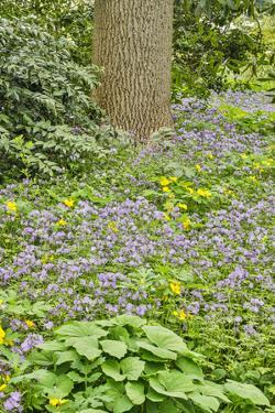 USA, Delaware, Hockessin. Plants surrounding the tree trunk by Hollice Looney
