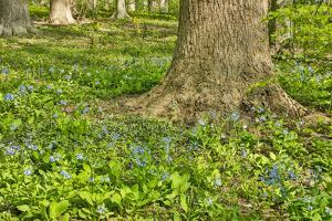 USA, Delaware, Hockessin. Tree trunk surrounded by groundcover by Hollice Looney