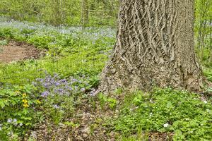 USA, Delaware, Hockessin. Tree trunk with groundcover by Hollice Looney