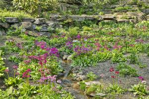 USA, Delaware, Wilmington. Brook running between rocks and flowers by Hollice Looney