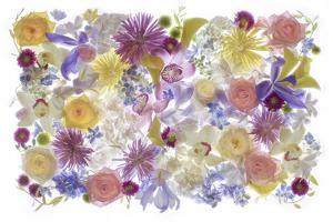 USA, Florida. Floral bounty by Hollice Looney