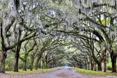 USA, Georgia, Savannah. drive at entrance to plantation by Hollice Looney