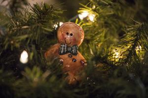 USA, Maryland, Bethesda, Gingerbread Man by Hollice Looney