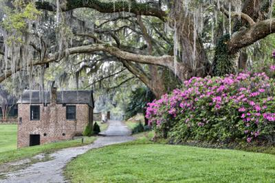 USA, North Carolina, Charleston., pathway through the plantation by Hollice Looney