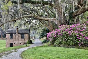 USA, North Carolina, Charleston., pathway through the plantation by Hollice Looney