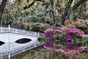 USA, North Carolina., white bridge with Azaleas and moss-covered tree by Hollice Looney