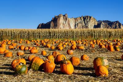 USA, Oregon, Bend. Pumpkin harvest by Hollice Looney