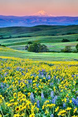 USA, Oregon, Columbia River Gorge landscape of field and Mt. Hood by Hollice Looney