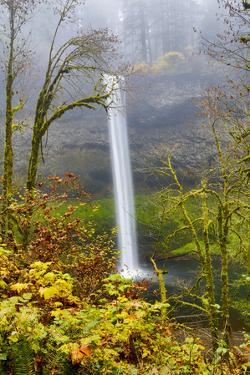 USA, Oregon, Silver Falls State Park, South Falls by Hollice Looney