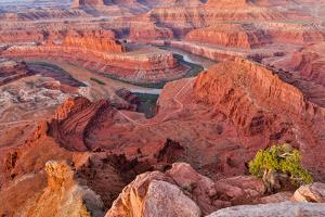 USA, Utah, Moab. Dead Horse State Park, Dead Horse Point in early morning by Hollice Looney