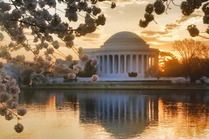 USA, Washington DC, Jefferson Memorial with Cherry Blossoms at Sunrise by Hollice Looney