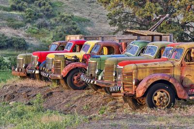 USA, Washington State, Palouse. Antique trucks.