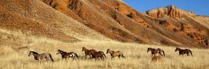 Wyoming, Shell, Horses Running by Hollice Looney