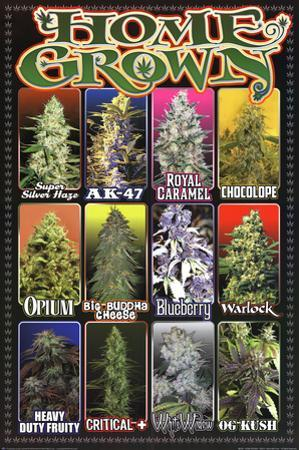 Home Grown - Pot Marijuana Strains