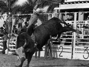 Homestead Rodeo, 1983
