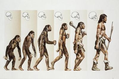 Hominid Evolution Through Time
