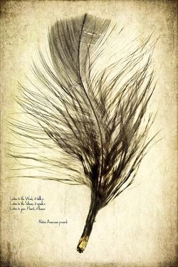 Feather on the Wind II by Honey Malek