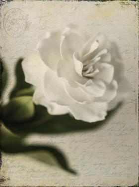 Gardenia Grunge II by Honey Malek