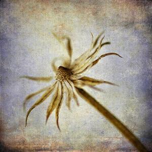 Grunge Remnants III by Honey Malek