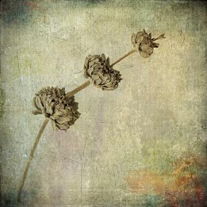 Grunge Remnants IV by Honey Malek