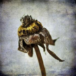 Grunge Remnants VII by Honey Malek