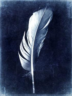 Inverted Feather II by Honey Malek