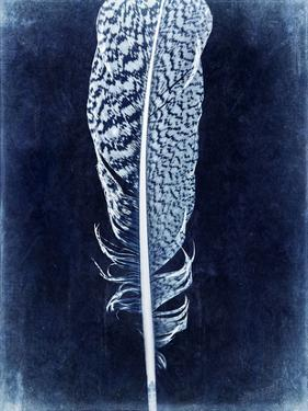 Inverted Feather IV by Honey Malek