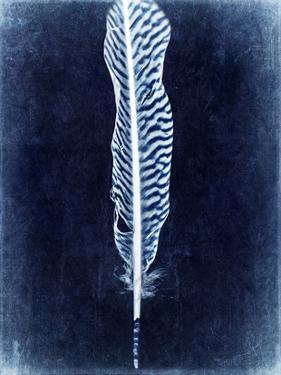 Inverted Feather V by Honey Malek