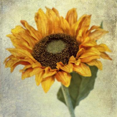 Lush Vintage Florals I