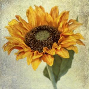 Lush Vintage Florals I by Honey Malek