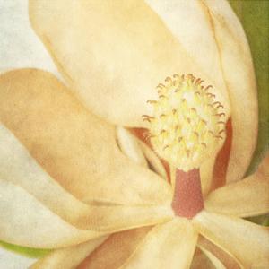 Vintage Magnolia II by Honey Malek