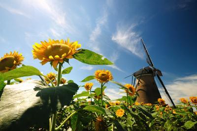 Dutch Windmill by hongwicha